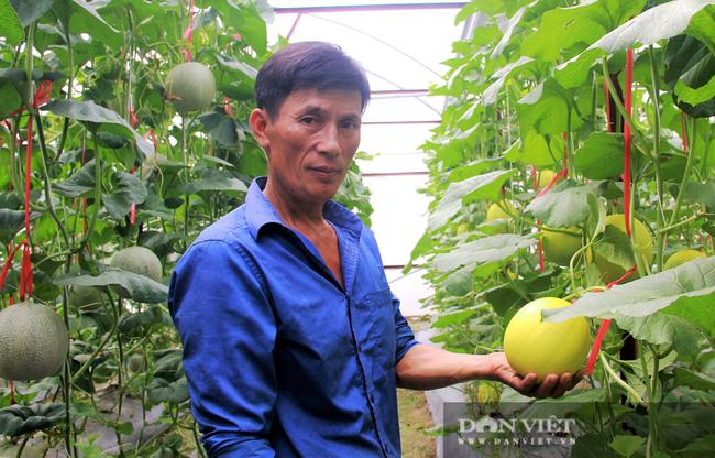 Hội Nông dân Hà Tĩnh làm cầu nối tiêu thụ dưa lưới giúp người dân vùng dịch - Ảnh 1.