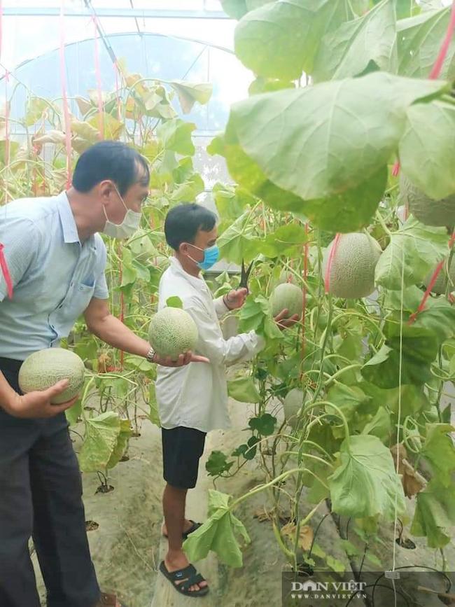 Hội Nông dân Hà Tĩnh làm cầu nối tiêu thụ dưa lưới giúp người dân vùng dịch - Ảnh 4.