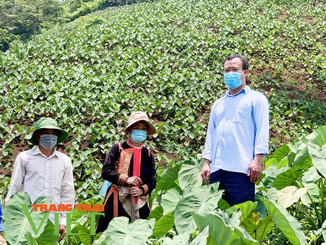 Lai Châu: Chuyển đổi cơ cấu cây trồng tăng hiệu quả kinh tế ở xã Nậm Xe   - Ảnh 1.