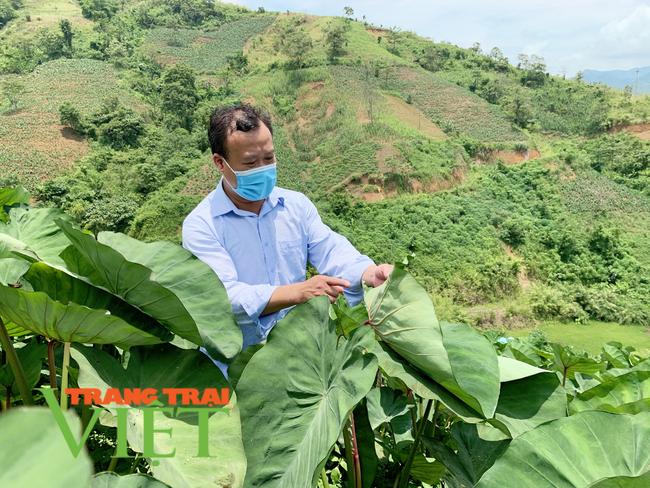 Lai Châu: Chuyển đổi cơ cấu cây trồng tăng hiệu quả kinh tế ở xã Nậm Xe   - Ảnh 3.