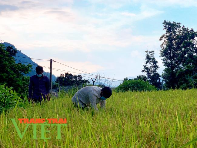 Lai Châu: Chuyển đổi cơ cấu cây trồng tăng hiệu quả kinh tế ở xã Nậm Xe   - Ảnh 5.