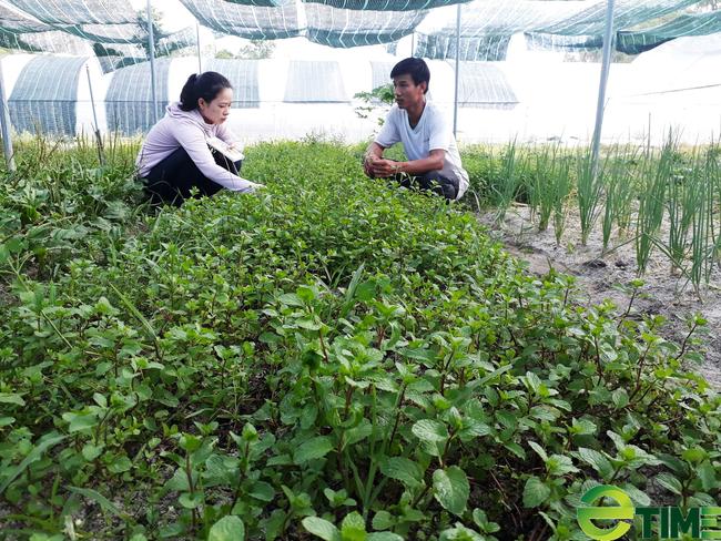 Quảng Nam: Thủ tướng công nhận thành phố Tam Kỳ đạt chuẩn Nông thôn mới - Ảnh 6.