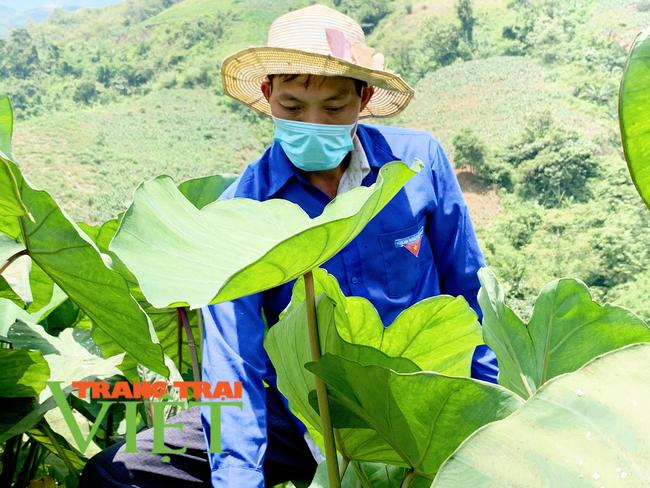 Lai Châu: Người đảng viên gương mẫu trong phát triển kinh tế   - Ảnh 3.