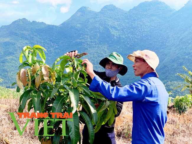 Lai Châu: Người đảng viên gương mẫu trong phát triển kinh tế   - Ảnh 5.