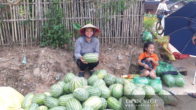Thái Nguyên: Liều đưa cây ra quả xanh ruột đỏ xuống ruộng trồng, chị nông dân thu hái quả mỏi tay - Ảnh 6.