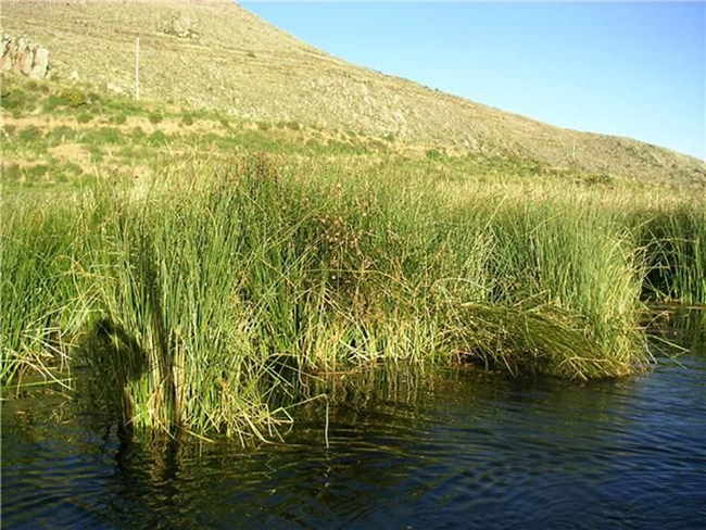 """Quần đảo lau sậy độc lạ của """"bộ lạc thảm bay"""" trên hồ Titicaca cao nhất thế giới - Ảnh 7."""
