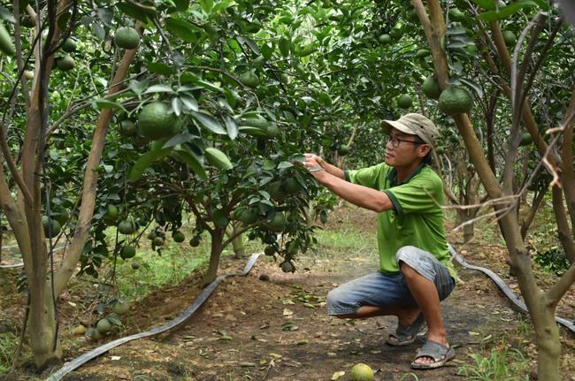 Vựa lúa sống cùng nỗi lo cây - con mới (bài 4): 4 vấn đề để sản xuất bền vững  - Ảnh 1.