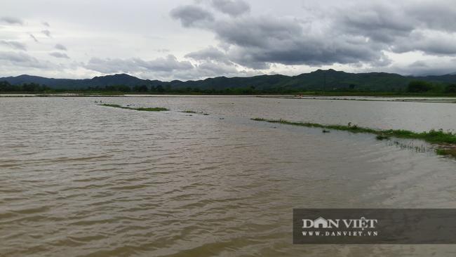 Hà Tĩnh: Nông dân bất lực nhìn lúa Hè Thu vừa gieo cấy chìm trong biển nước sau hai ngày mưa lớn - Ảnh 1.