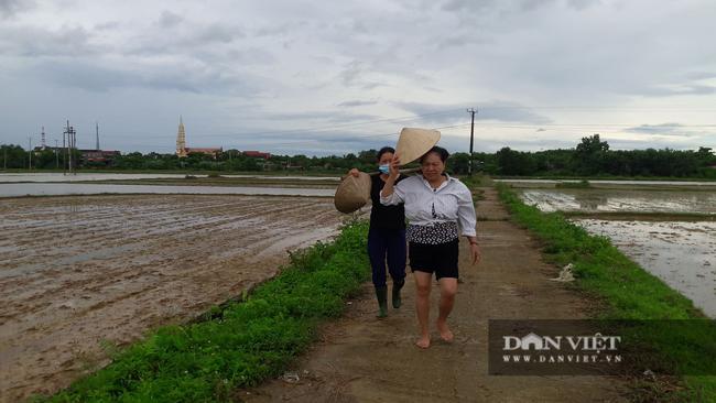 Hà Tĩnh: Nông dân bất lực nhìn lúa Hè Thu vừa gieo cấy chìm trong biển nước sau hai ngày mưa lớn - Ảnh 7.