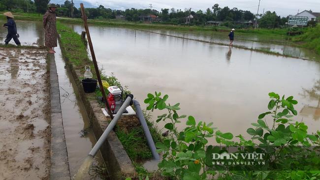 Hà Tĩnh: Nông dân bất lực nhìn lúa Hè Thu vừa gieo cấy chìm trong biển nước sau hai ngày mưa lớn - Ảnh 6.
