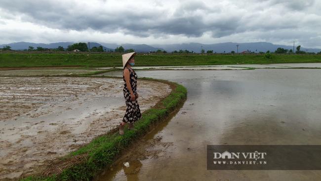 Hà Tĩnh: Nông dân bất lực nhìn lúa Hè Thu vừa gieo cấy chìm trong biển nước sau hai ngày mưa lớn - Ảnh 4.