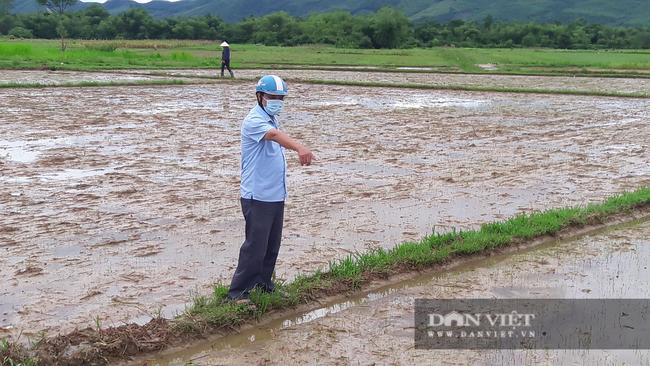 Hà Tĩnh: Nông dân bất lực nhìn lúa Hè Thu vừa gieo cấy chìm trong biển nước sau hai ngày mưa lớn - Ảnh 3.