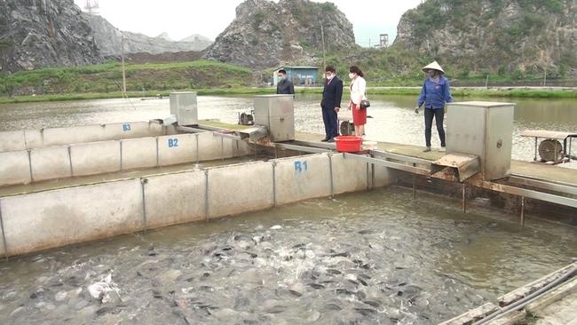 Tăng thu nhập từ nuôi cá trắm đen, trồng bưởi VietGAP - Ảnh 1.