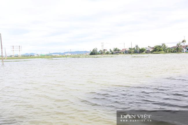 Hà Tĩnh: Ruộng thành sông, hàng nghìn ha lúa chìm trong biển nước - Ảnh 3.
