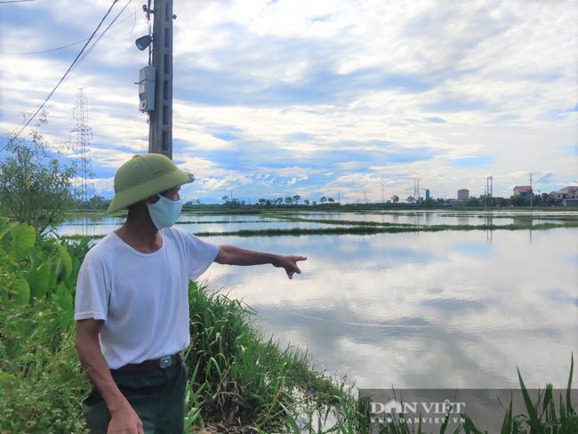Hà Tĩnh: Ruộng thành sông, hàng nghìn ha lúa chìm trong biển nước - Ảnh 2.