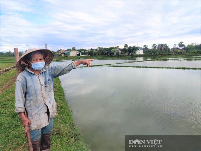 Hà Tĩnh: Ruộng thành sông, hàng nghìn ha lúa chìm trong biển nước - Ảnh 6.