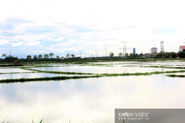 Hà Tĩnh: Ruộng thành sông, hàng nghìn ha lúa chìm trong biển nước - Ảnh 7.