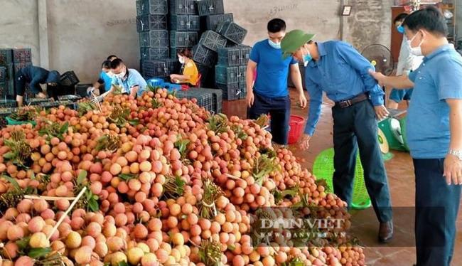 Báo NTNN/ Điện tử Dân Việt hỗ trợ tiêu thụ vải thiều Bắc Giang - Ảnh 1.