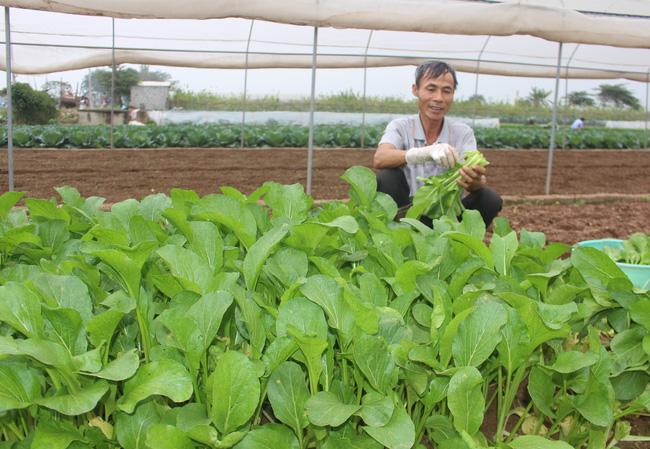 Tiếp vốn giúp nông dân Chúc Sơn trồng rau an toàn - Ảnh 1.
