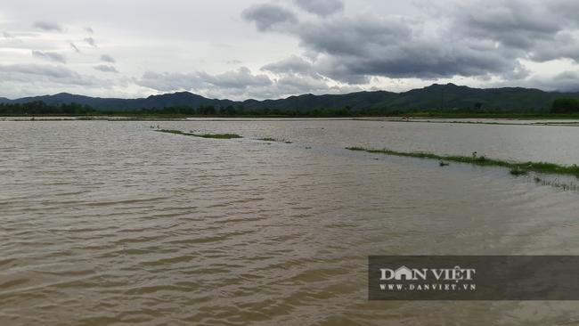 Hà Tĩnh: Nông dân tất bật gieo lại lúa sau ảnh hưởng của cơn bão số 2 - Ảnh 2.