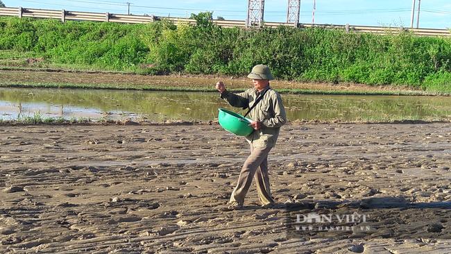Hà Tĩnh: Nông dân tất bật gieo lại lúa sau ảnh hưởng của cơn bão số 2 - Ảnh 5.