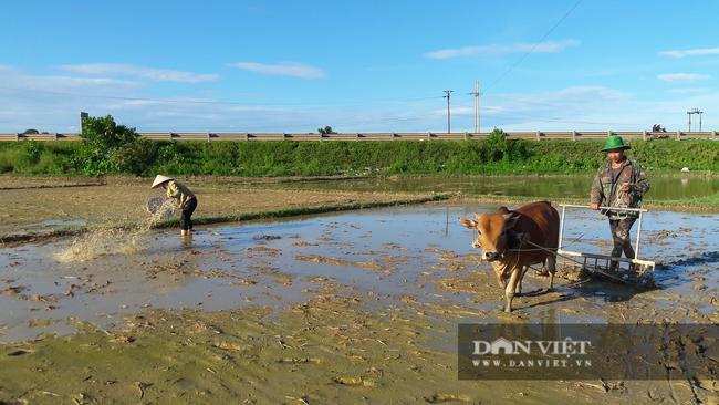 Hà Tĩnh: Nông dân tất bật gieo lại lúa sau ảnh hưởng của cơn bão số 2 - Ảnh 7.