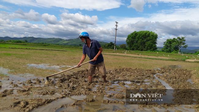 Hà Tĩnh: Nông dân tất bật gieo lại lúa sau ảnh hưởng của cơn bão số 2 - Ảnh 8.