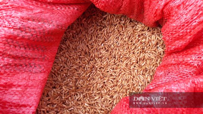 Hà Tĩnh: Nông dân tất bật gieo lại lúa sau ảnh hưởng của cơn bão số 2 - Ảnh 9.