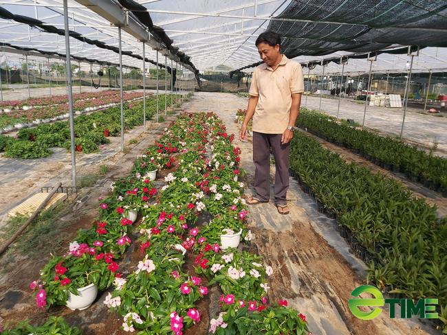 Quảng Nam: Được Agribank tiếp vốn, nhiều nông dân mạnh dạn vay vốn làm ăn thoát nghèo - Ảnh 4.