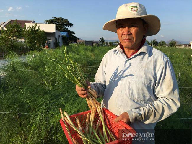 Ninh Thuận: Ở nơi nắng phai màu áo, đất khô cằn, táo, măng tây, nho vẫn cho nông dân thu tiền tỷ - Ảnh 1.