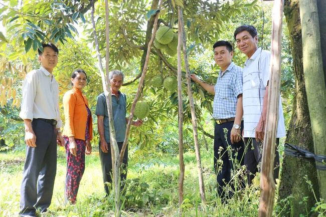gop/Nhà nông Đồng Nai rủ nhau trồng sầu riêng VietGAP - Ảnh 1.