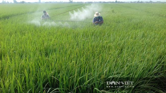 Giá phân tăng mạnh, lái bỏ chạy, nông dân trồng lúa vụ hè thu chới với - Ảnh 1.