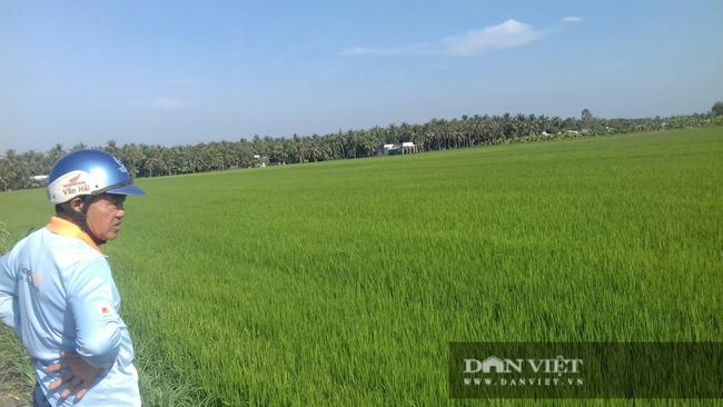 Giá phân tăng mạnh, lái bỏ chạy, nông dân trồng lúa vụ hè thu chới với - Ảnh 2.