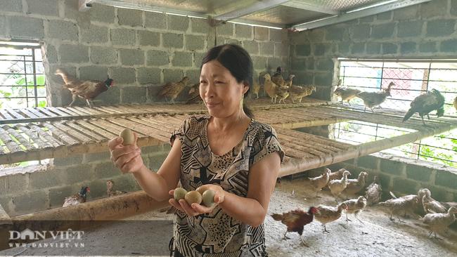 Nam Định: Nuôi loại chim quý mắn đẻ như gà, mỗi tháng bỏ túi hàng chục triệu đồng  - Ảnh 5.