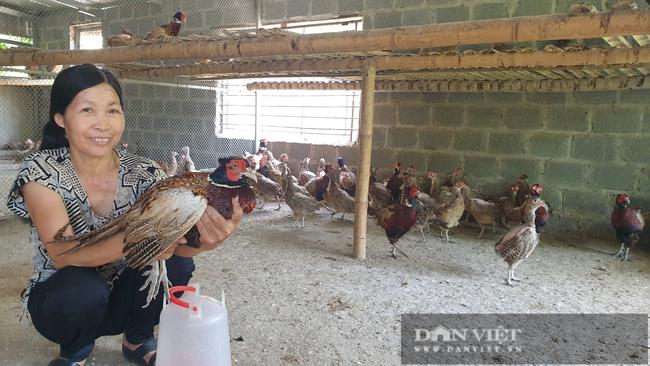 Nam Định: Nuôi loại chim quý mắn đẻ như gà, mỗi tháng bỏ túi hàng chục triệu đồng  - Ảnh 6.