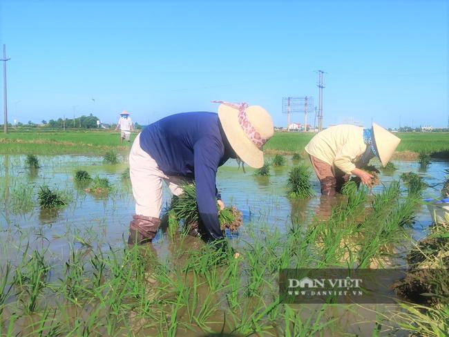 Clip - Ảnh: Nắng đỉnh điểm, nông dân Hà Tĩnh cực nhọc ra đồng làm việc - Ảnh 11.