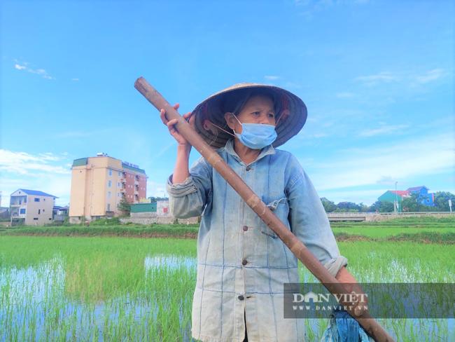 Clip - Ảnh: Nắng đỉnh điểm, nông dân Hà Tĩnh cực nhọc ra đồng làm việc - Ảnh 8.