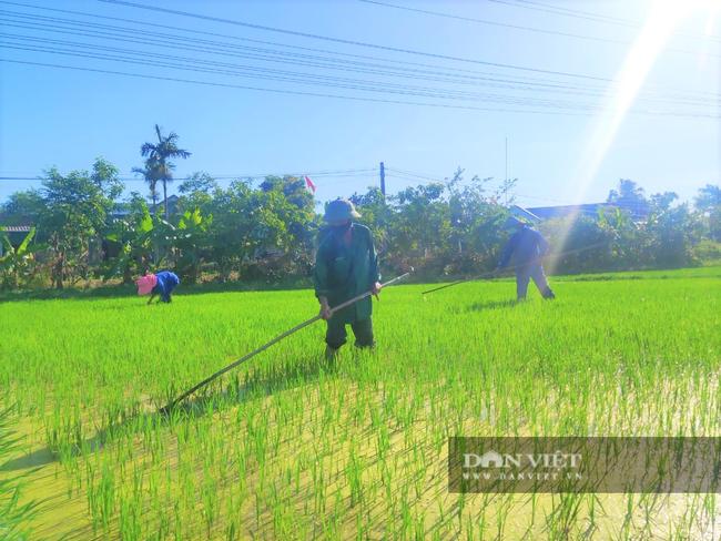Clip - Ảnh: Nắng đỉnh điểm, nông dân Hà Tĩnh cực nhọc ra đồng làm việc - Ảnh 12.