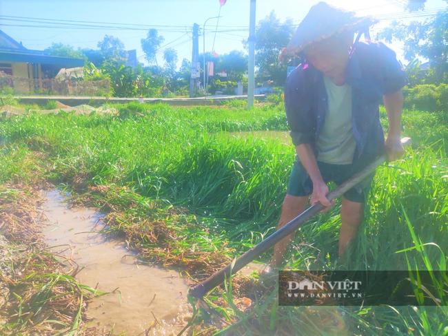Clip - Ảnh: Nắng đỉnh điểm, nông dân Hà Tĩnh cực nhọc ra đồng làm việc - Ảnh 2.