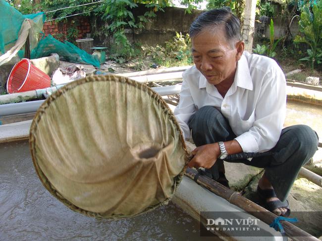 Tiền Giang: Thương loại cá đặc sản miền Tây sắp tuyệt chủng, ông nông dân bắt về ương giống, bất ngờ giàu to - Ảnh 1.