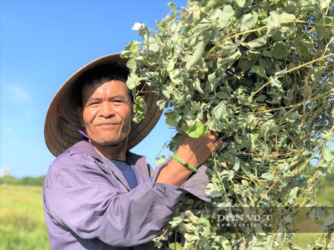 Nông dân Hà Tĩnh trồng cây chữa bách bệnh, được mùa giá lại cao