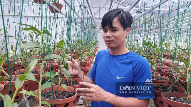 8X Lai Châu bỏ việc chuyên môn về chăm vườn lan bạc tỷ vạn người mê - Ảnh 1.