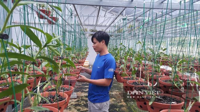 8X Lai Châu bỏ việc chuyên môn về chăm vườn lan bạc tỷ vạn người mê - Ảnh 2.