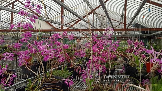 8X Lai Châu bỏ việc chuyên môn về chăm vườn lan bạc tỷ vạn người mê - Ảnh 3.