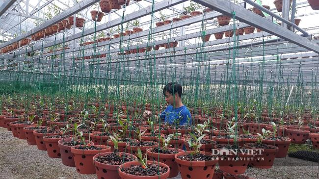 8X Lai Châu bỏ việc chuyên môn về chăm vườn lan bạc tỷ vạn người mê - Ảnh 4.