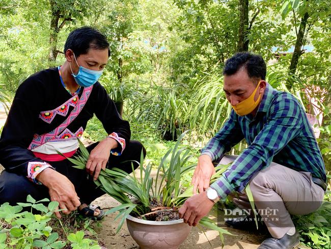 Lai Châu: Người trồng địa lan Trần Mộng mất ăn mất ngủ vì bệnh lạ trên cây   - Ảnh 3.