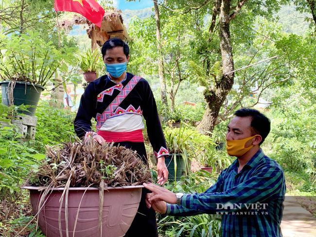 Lai Châu: Người trồng địa lan Trần Mộng mất ăn mất ngủ vì bệnh lạ trên cây   - Ảnh 5.