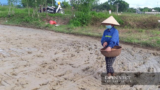 Hà tĩnh: Nông dân tích cực phục hồi sản xuất vụ Hè Thu sau bão số 2 - Ảnh 8.