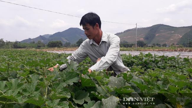 Trồng đủ các loại rau củ quả mùa nào thức nấy, nông dân ở đây khấm khá hơn hẳn - Ảnh 1.