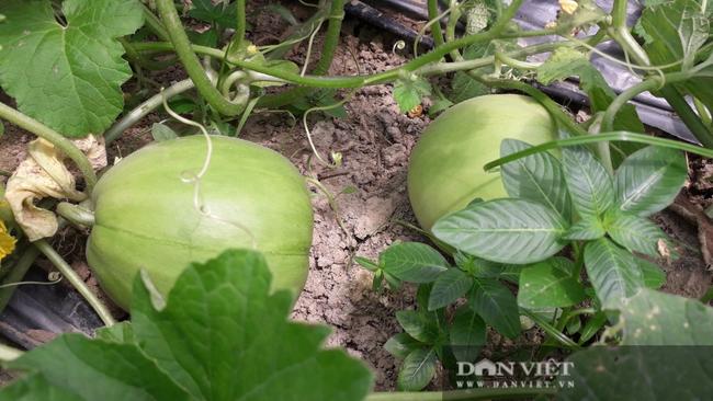 Trồng đủ các loại rau củ quả mùa nào thức nấy, nông dân ở đây khấm khá hơn hẳn - Ảnh 2.